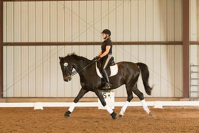 Horse 558