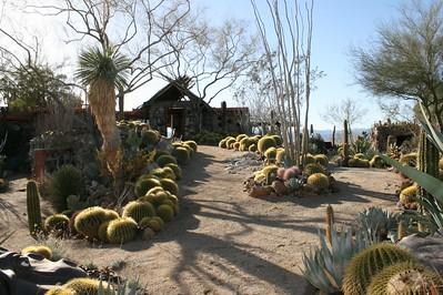 Mojave Rock Palm Springs