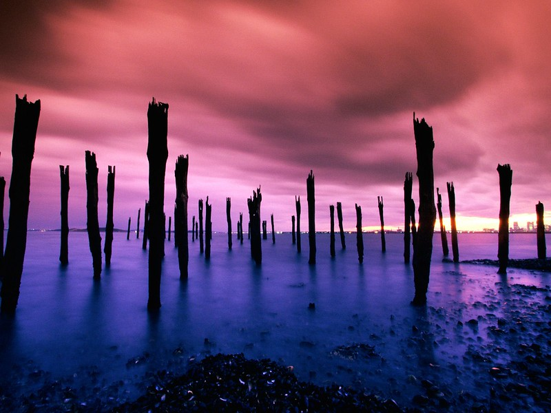 Dock Pilings, Boston Harbor, Massachusetts.jpg