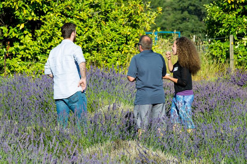 Evergreen Lavender Farm-68.JPG