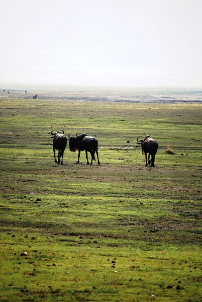 Ngorongoro (16).JPG
