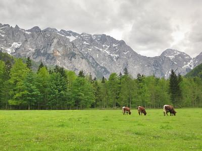 2012 Slovenia