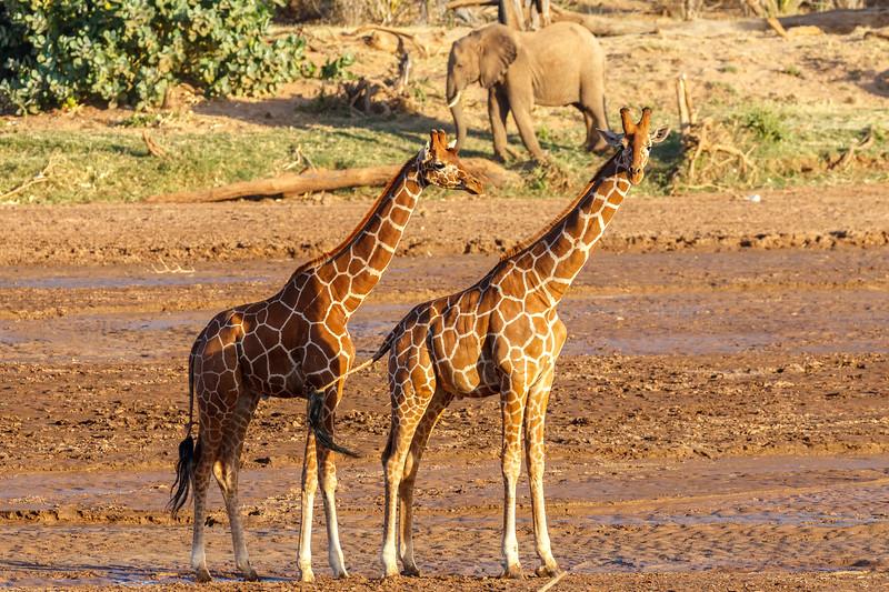 Kenya 2015-00186.jpg