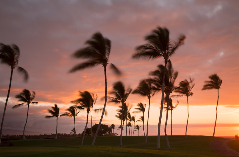 14_Hawaii__MG_9896.jpg