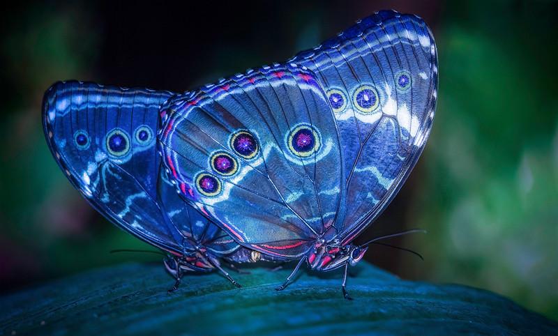 Butterfly-075.jpg