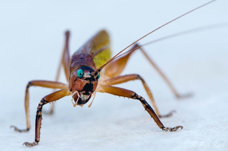 Grasshopper3-.jpg