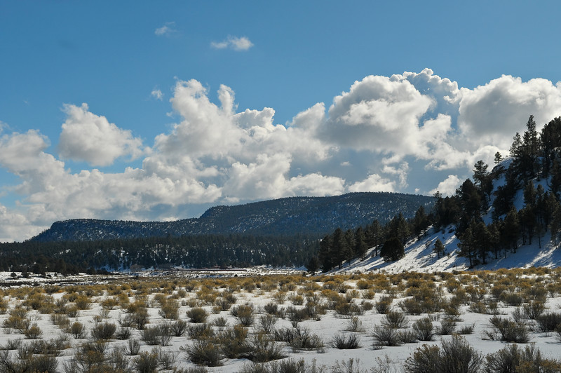 Mangas Mountains, Apache National Forest, New Mexico