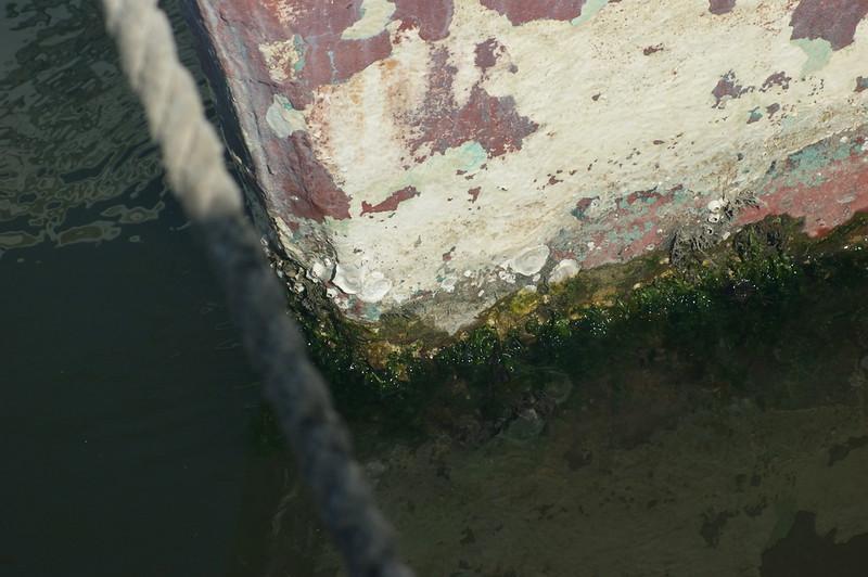 Campaign, Shrimp Boat 051.jpg