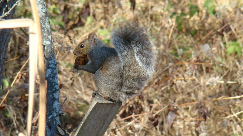 App.Trail Fall 2008,Fl. Maine 263.JPG