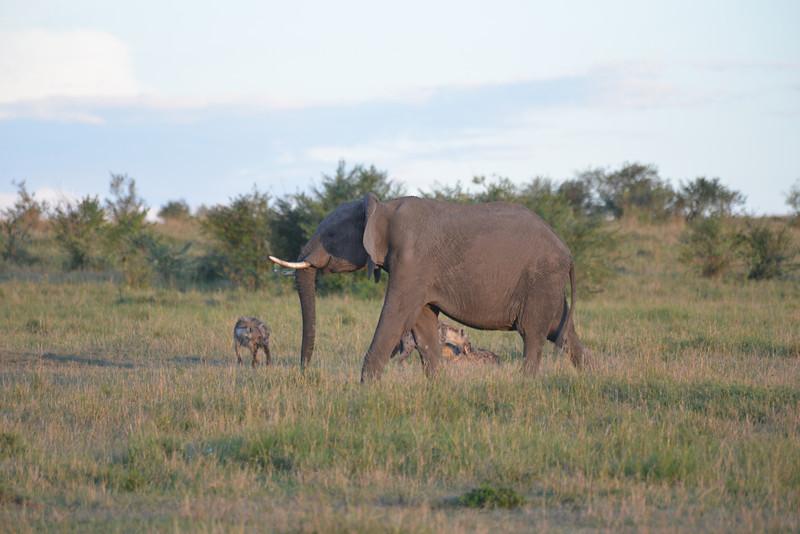 East Africa Safari 176.jpg