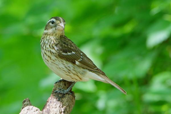 Birding 2021 May
