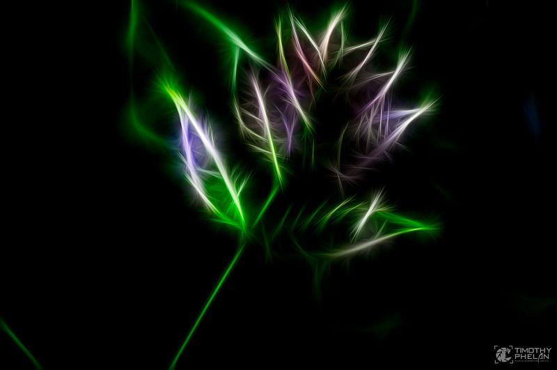 DSC_0231-Feather Flower.jpg