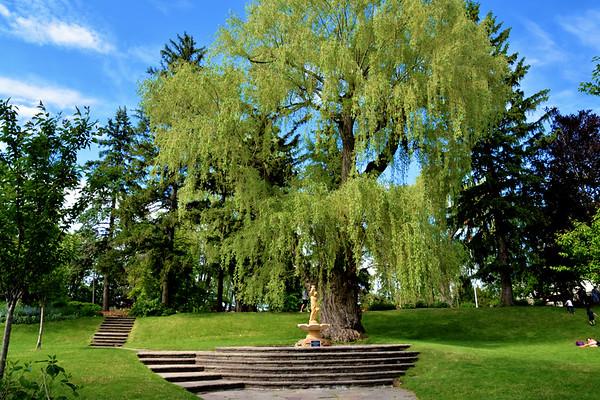 Toronto Botanical Garden (June 2019)