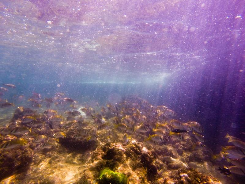Dive in El Nido Series 3 Photograph 2
