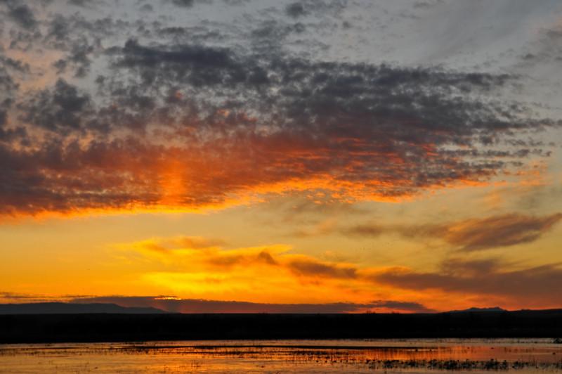 Bosque del Apache sunrise