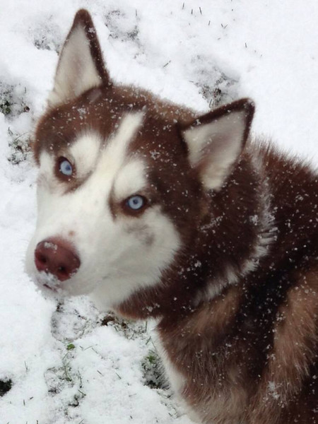 Blue-eyed Bobo lovin' the snow!  Photographer's Name: Sheryl Root Photographer's City and State: Corbin, KY