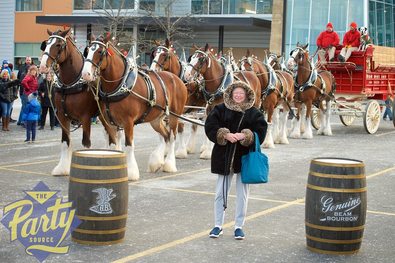 Clydesdale Portraits 167.jpg