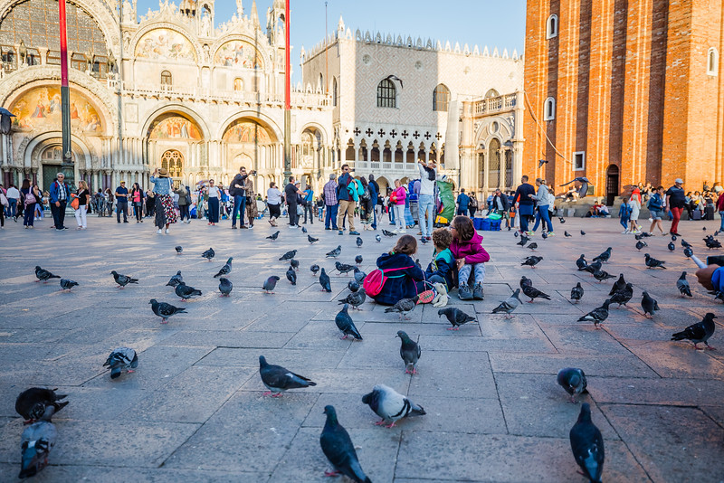 Pigeons in San Marco Square in Venice