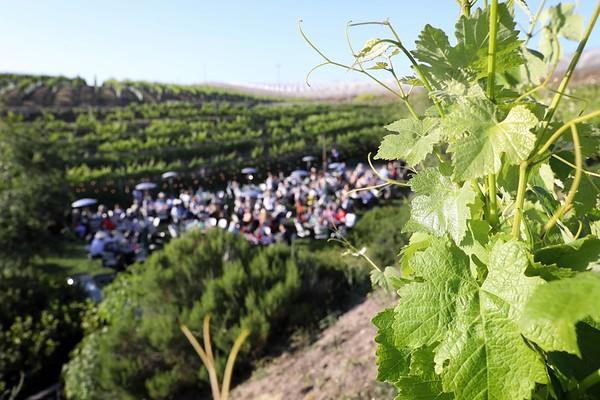 06-02-2018 Fiesta in the Vines