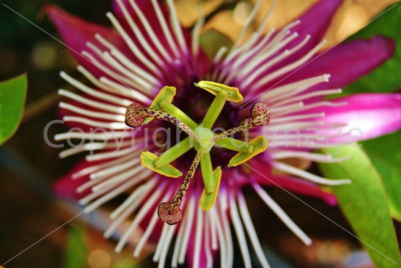#68 Pink flower green pistil.JPG