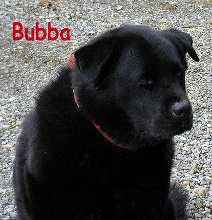 Bubba-Dog.jpg