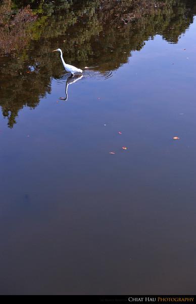 Birdie walking on the lake