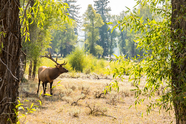 Yellowstone NP and Grand Teton NP 2017