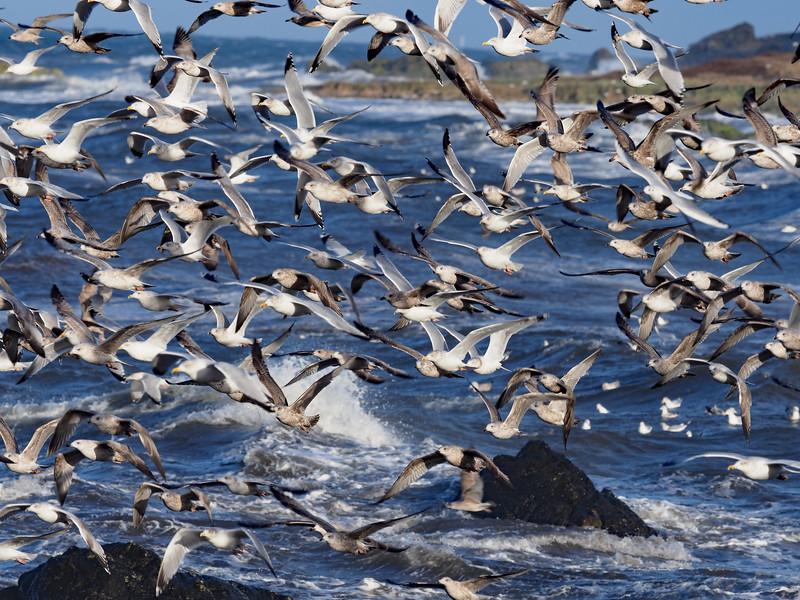 Gulls 2.jpg