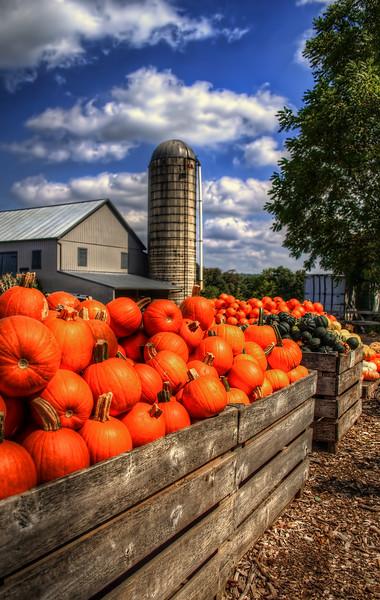 Brecknock Orchard - Pumpkin Bins(p).jpg
