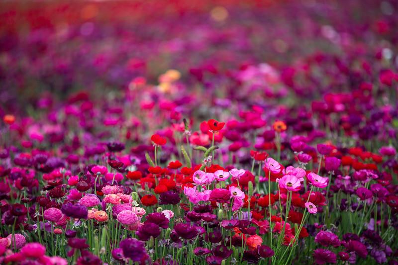 Spring Flowers B-407.jpg