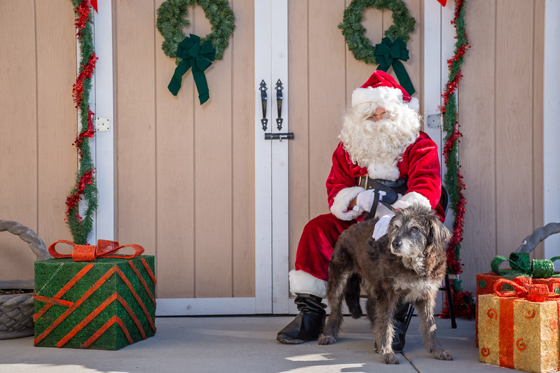 Pet Pictures With Santa-43.jpg
