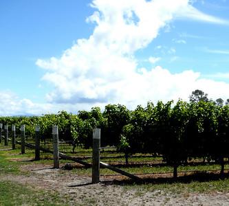 NZ: Blenheim, Marlborough Wine Country