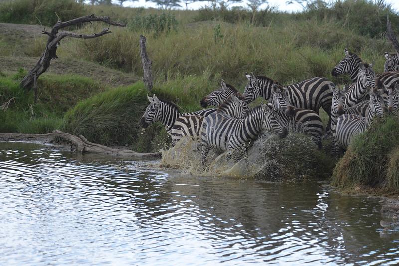 East Africa Safari 270.jpg