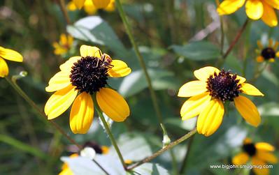 North Carolina Arboretum 8-16-09