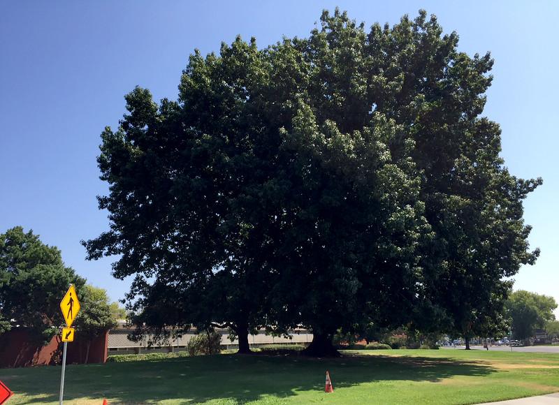 tree mohr hall.jpg