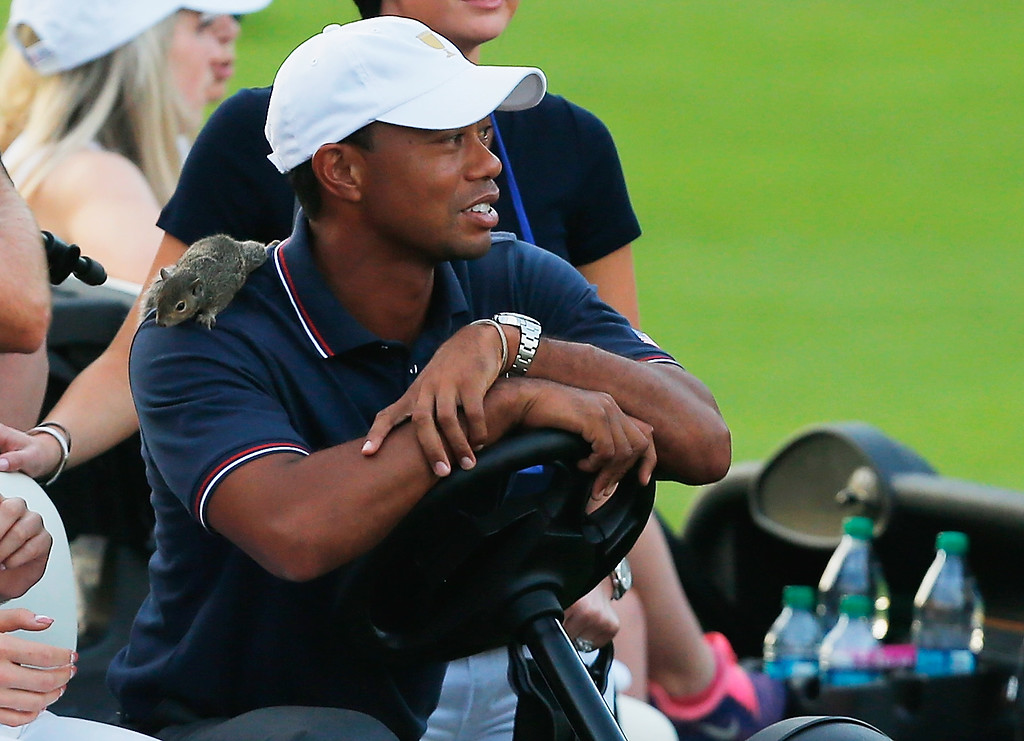 . DUBLIN, OH - OCTOBER 03:  A squirrel is seen on the shoulder of Tiger Woods of the U.S. Team during the Day One Four-Ball Matches at the Muirfield Village Golf Club on October 3, 2013  in Dublin, Ohio.  (Photo by Matt Sullivan/Getty Images)