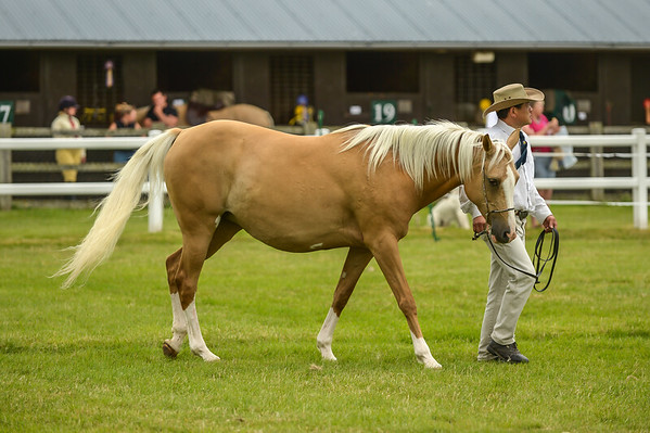 Class N6 Open (to exceed 14.2hh)
