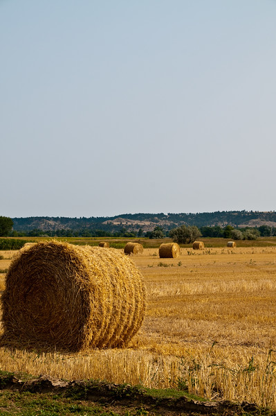 """Ive been trying to get a shot of these big round hay bails for a couple thousand miles. Every time I'd see one I could get to, it was too late to  stop. If I saw a field full of these where I ~could~ stop, I couldn't see a safe and/or legal way to get close enough. This photo has """"been in my head"""" for so darn long."""
