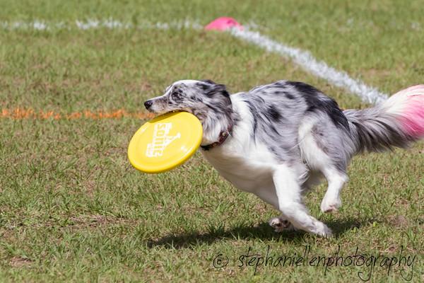 _MG_2976Up_dog_International_2016_StephaniellenPhotography.jpg