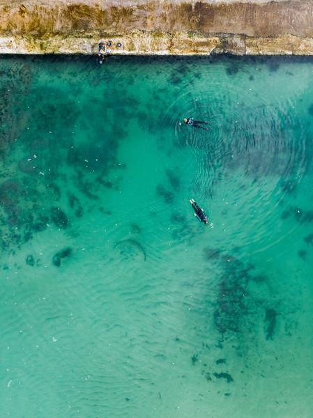 Camps Bay tidal pool biodiversity survey, 2020