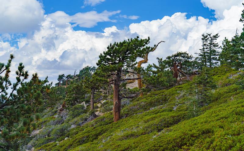 14_09_07 hiking PCT north from Islip 0283.jpg