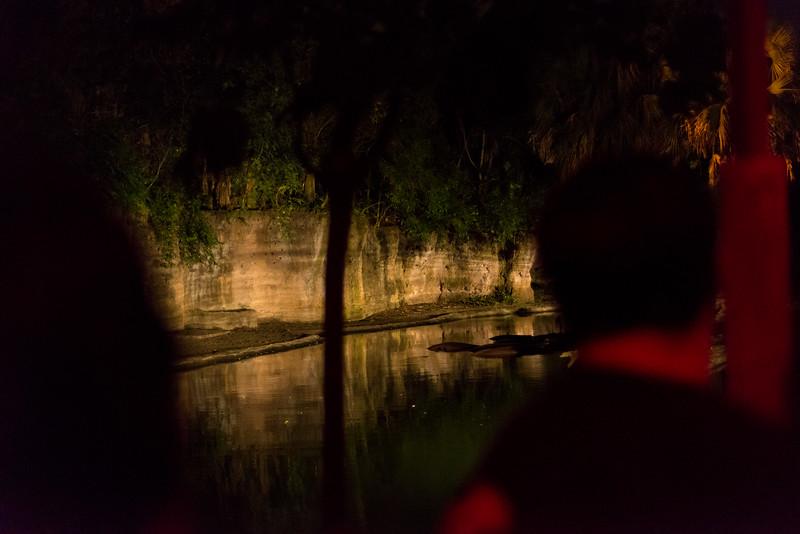 Kilimanjaro Safaris at Night - Hippos - Disney's Animal Kingdom, Walt Disney World