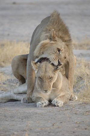 Ruaha Safari