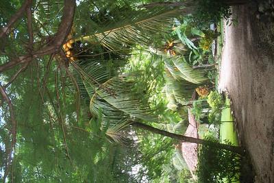 ACCOMMODATIONS - Playa Grande, CR - PROPERTIES
