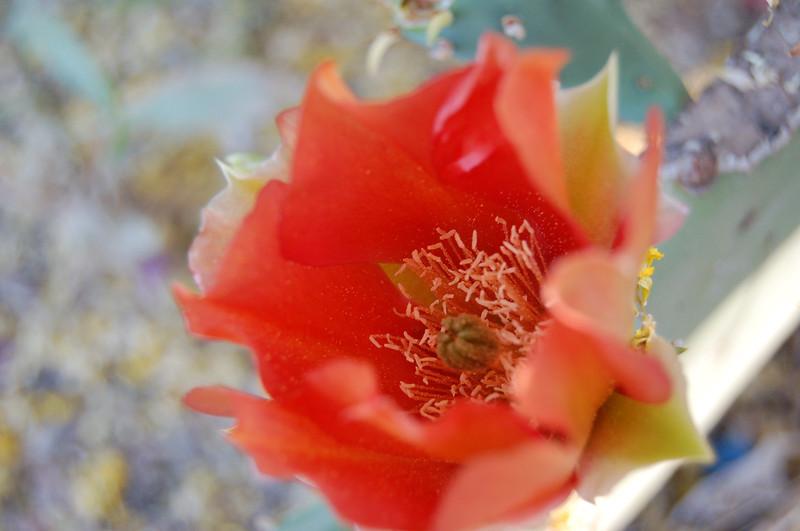 2008 05 02_0032.JPG