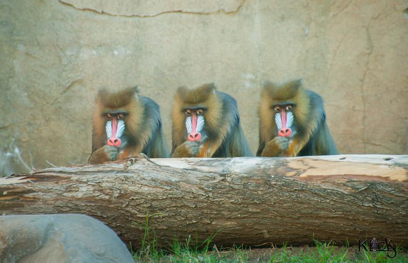 Monkeying around at the zoo.jpg