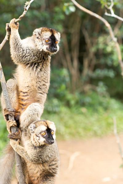Madagascar_2013_IG3A2428.jpg
