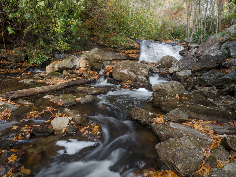 11 Oct 23 Pisgah Forest stream (1 of 1).jpg