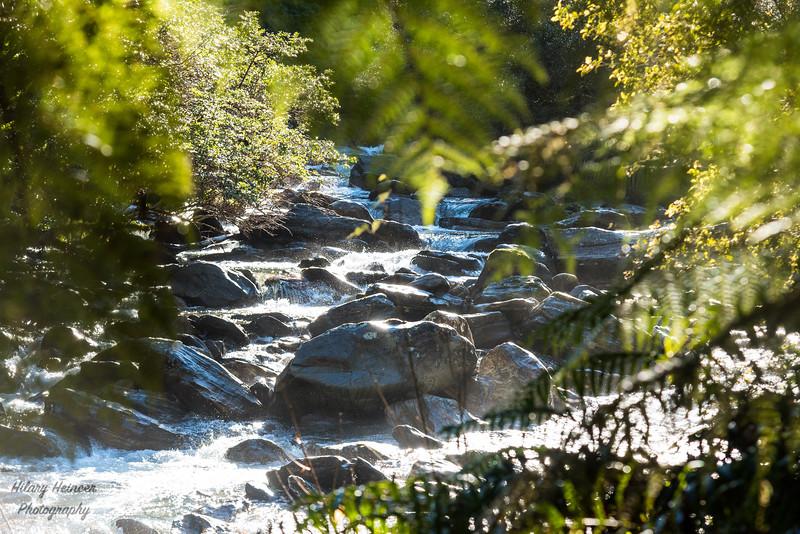 Westland Tai Poutini National Park 13