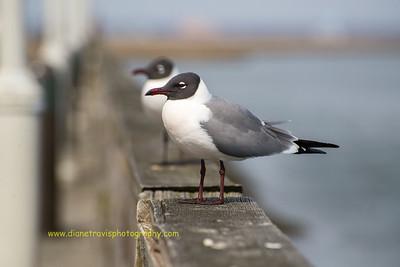 Birds of Atlantic City, NJ